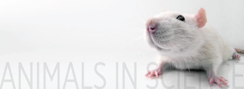 animals in Science Madeleine Kando